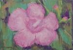 wildflower 358