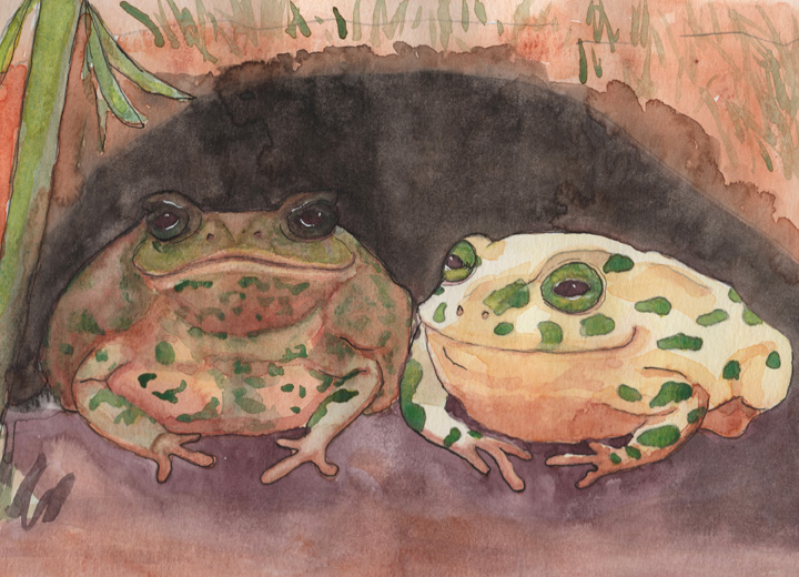 The Toads