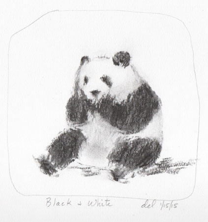 Panda - Black and White - 1/15/15 - vine charcoal
