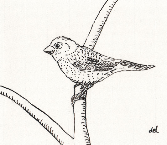 Finch on Arches paper - reed pen