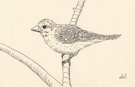 Finch on Southworth paper - micron pen