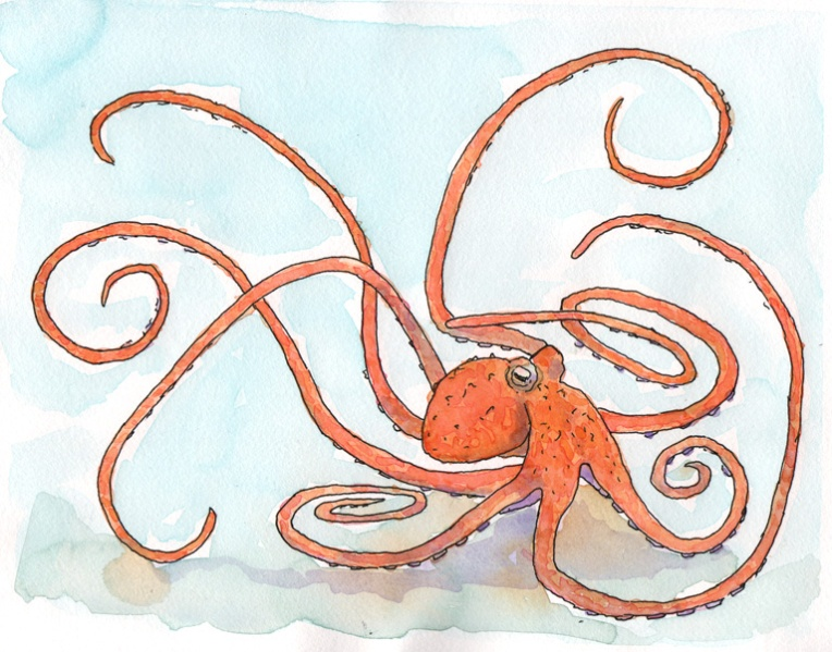 Octopus - watercolor and ink